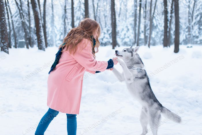 Siberian husky sitting near young woman