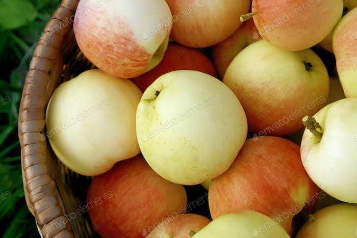 leckere Äpfel