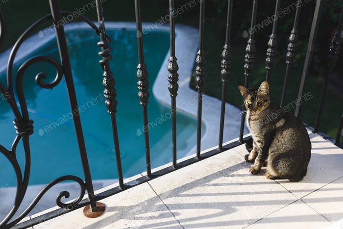 Pet cat sitting on balcony with swimming pool in the background