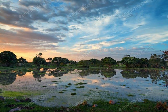 African marshland