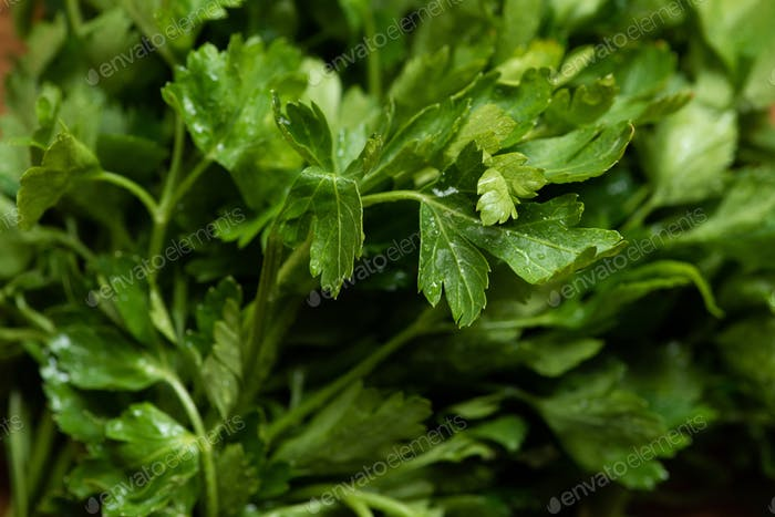 close up view of fresh green parsley