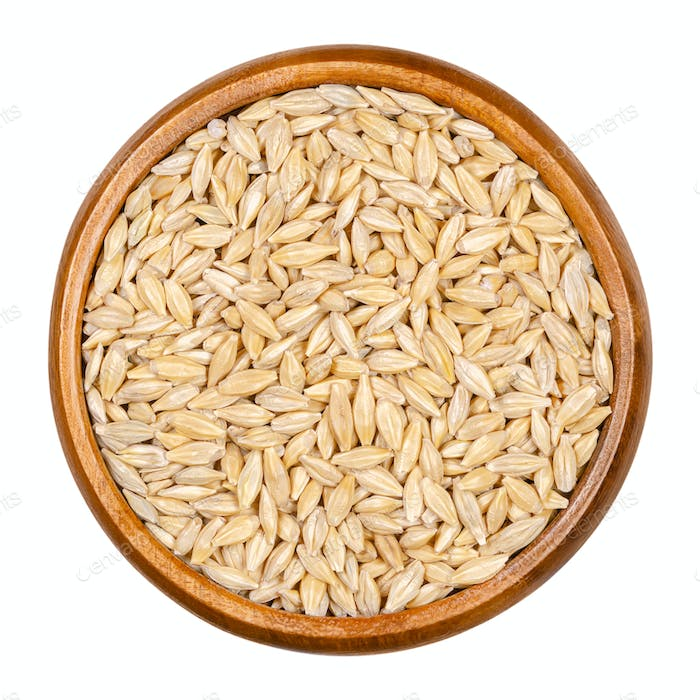 Barley grains, seeds with outer husk in wooden bowl