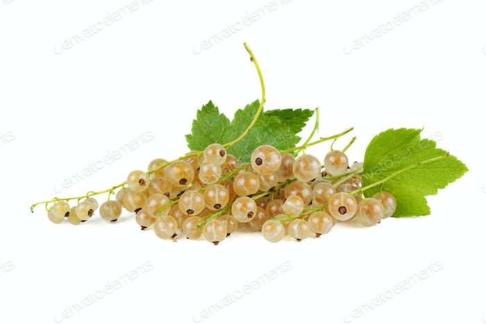 Cluster von weißen Johannisbeeren Beeren
