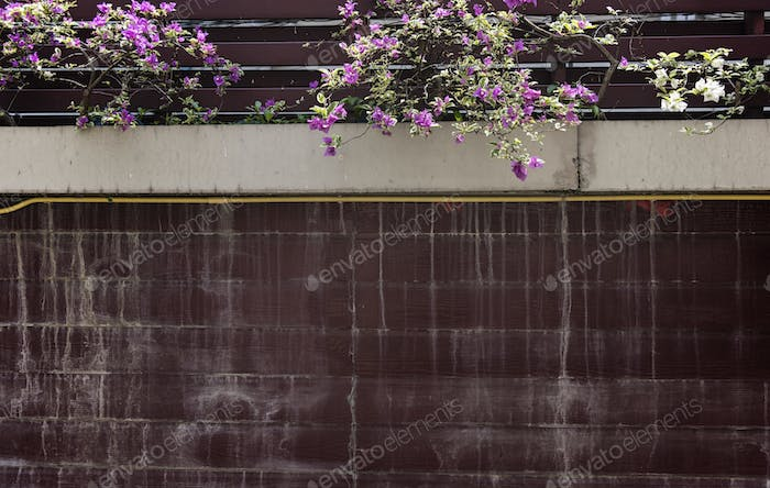 House wall with bougainvillea flowers