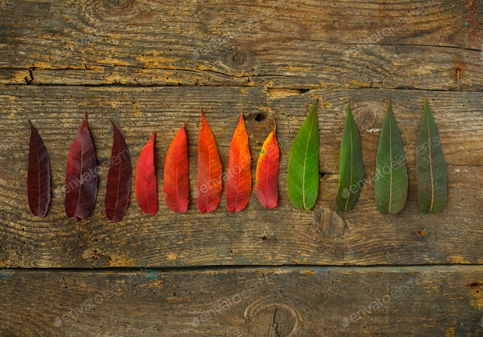 Red, yellow and green leaves on old wooden background
