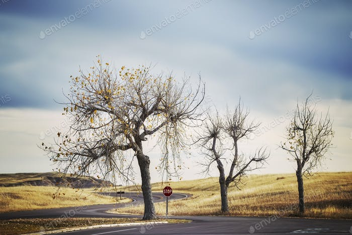 Three trees by a road and stop sign, retro stylized travel pictu