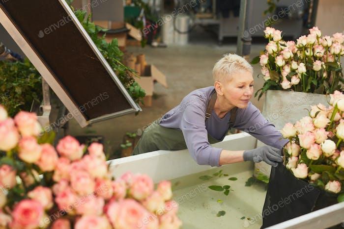 Mujer regando flores