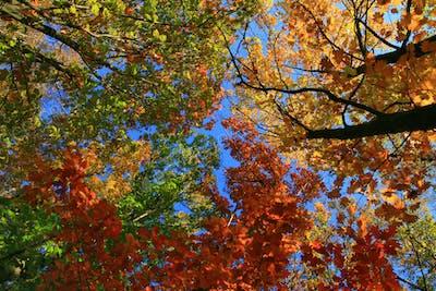Beautiful autumn landscape with autumn forest