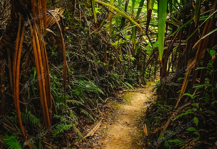 Jungle path in Sumatra
