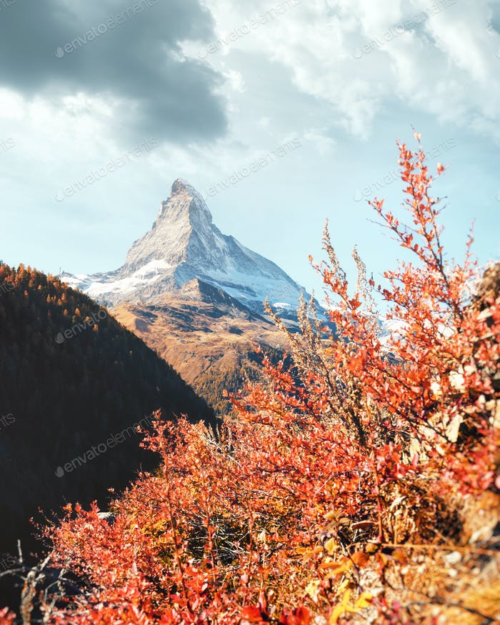 Matterhorn peak and red flowers