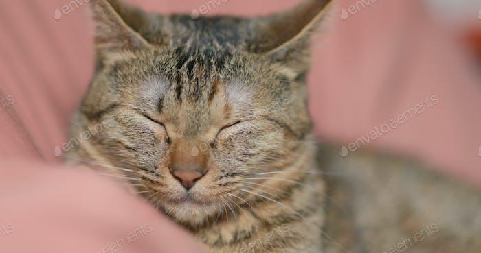 Cute domestic cat sleeping