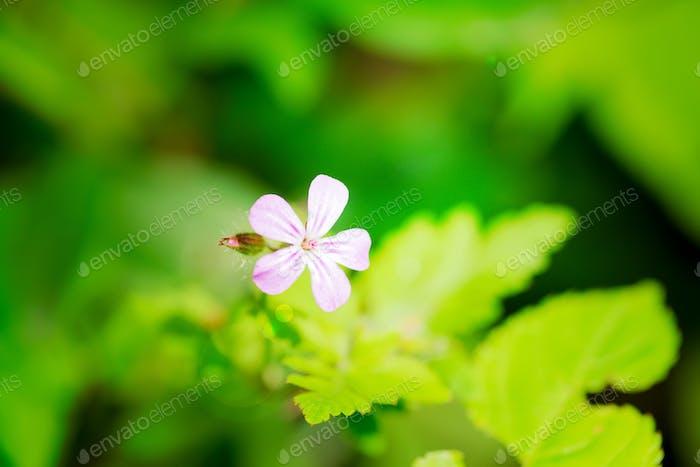 Frisch wachsende kleine zarte Gartenblumen auf einem verschwommenen grünen Blätterhintergrund an einem Sommertag