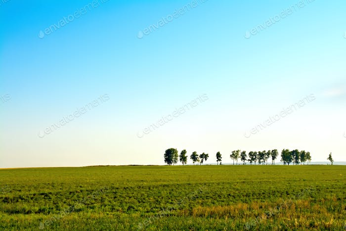 Landscape with trees and sky
