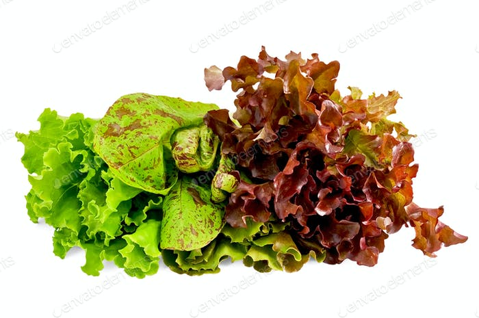 Lettuce green spotted and red