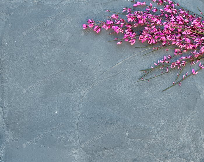 Purple spring blooming tree branch on a grey concrete stone background, top view, copy space.