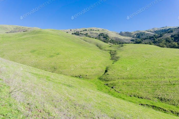 Grasbedeckte Hügel, Weg zum Mission Peak, Bucht von San Francisco im Süden, Kalifornien