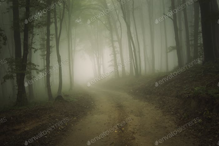 Straße durch den geheimnisvollen Wald mit Nebel