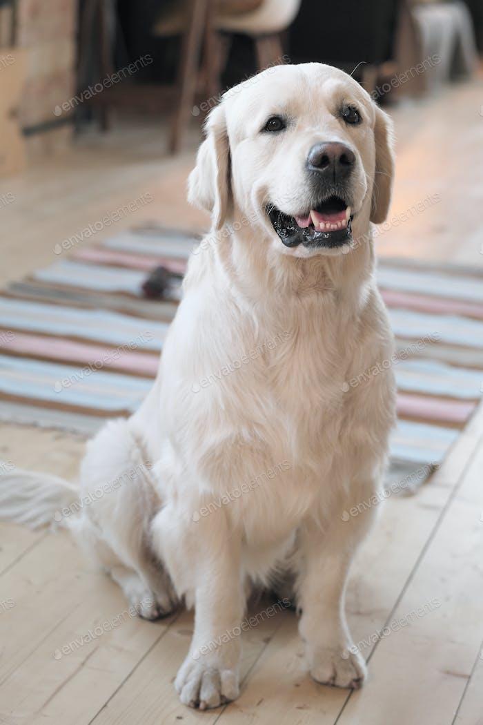 Beautiful pedigree dog