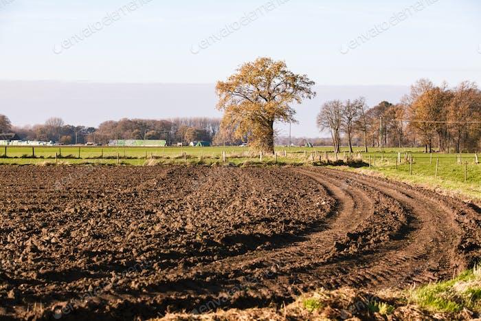 Gepflügtes Feld in der Nähe der Bäume. Die Bäume im Hintergrund eines gepflügten Feldes