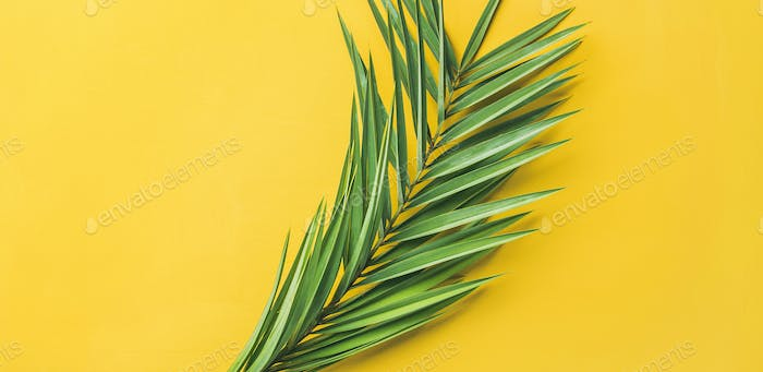 Green palm branches over yellow background, top view, wide composition