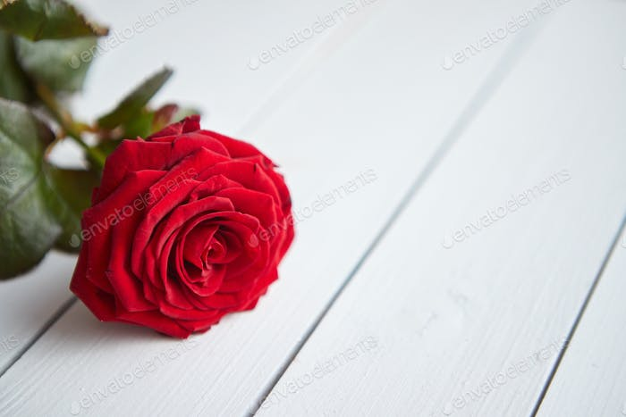 Fresh red rose flower on the white wooden table