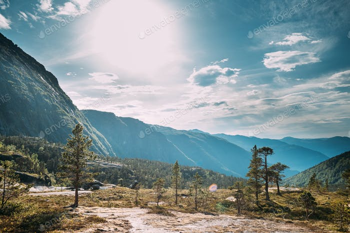 Kinsarvik, Hordaland, Norway. Forest In Hardangervidda Mountain Plateau. Famous Norwegian Landmark