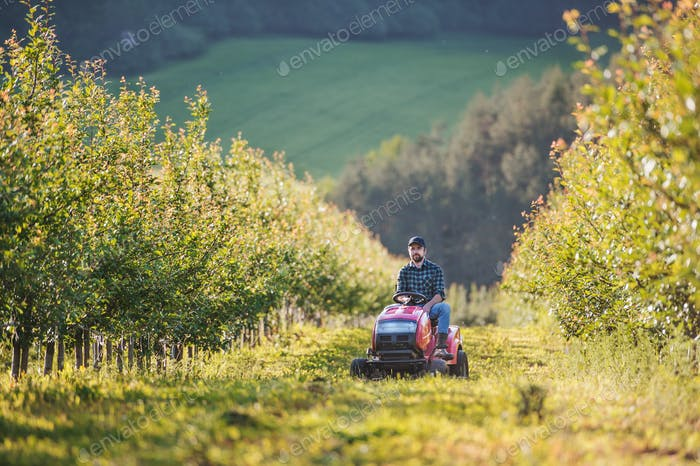 A mature farmer driving mini tractor outdoors in orchard