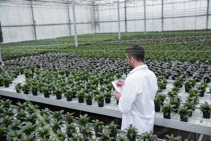 Young concentrated man standing in greenhouse near plants