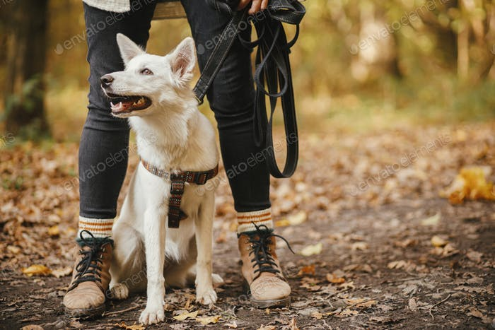 Cute dog sitting at owner legs in autumn woods. Traveling with pet, loyal companion