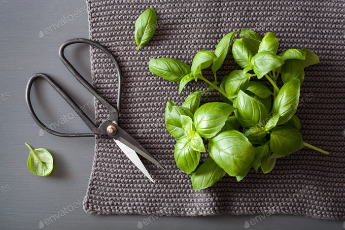 fresh basil herb on grey background