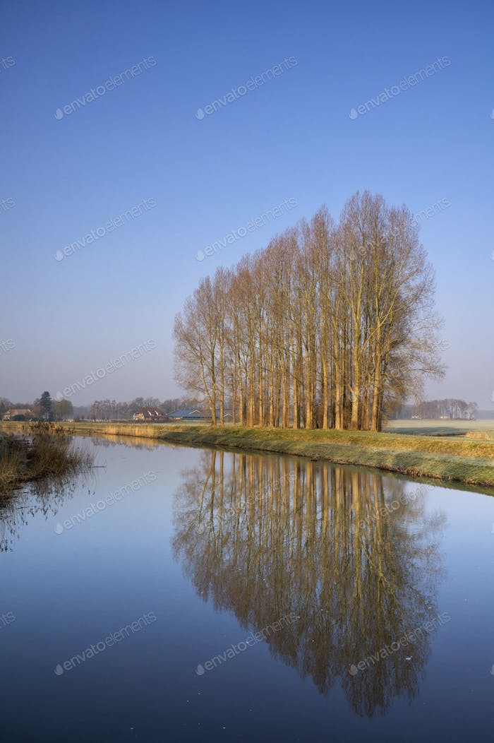 Row of trees along the Berkel