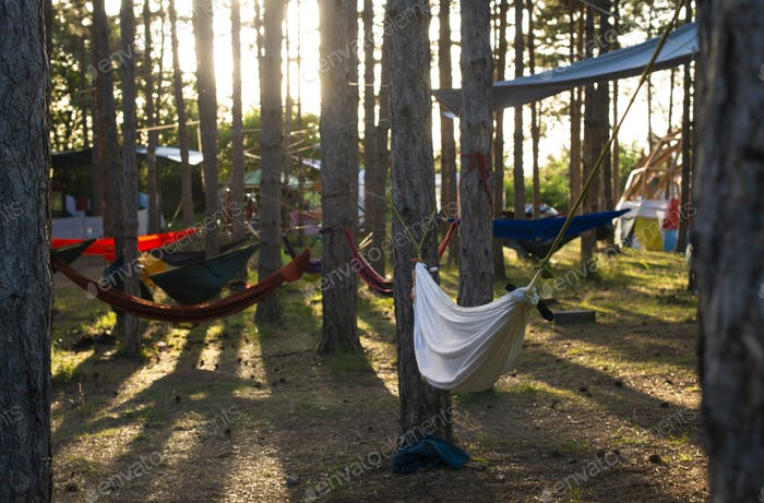 Hammocks on trees in the forest. Sunshine morning in the forest.