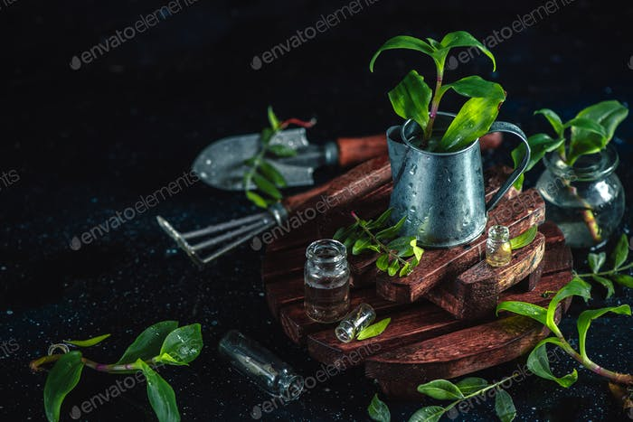 Gardeners tools, tiny watering can, spade and rakes on a dark background with fresh green leaves