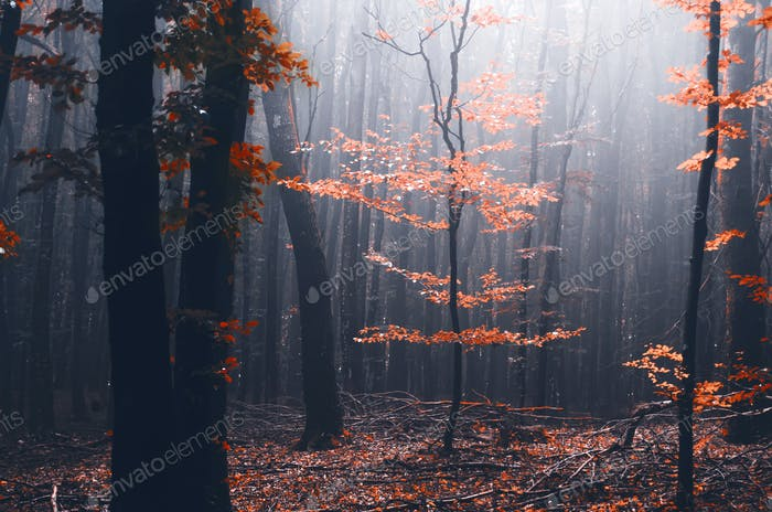 Red tree in mysterious autumn forest