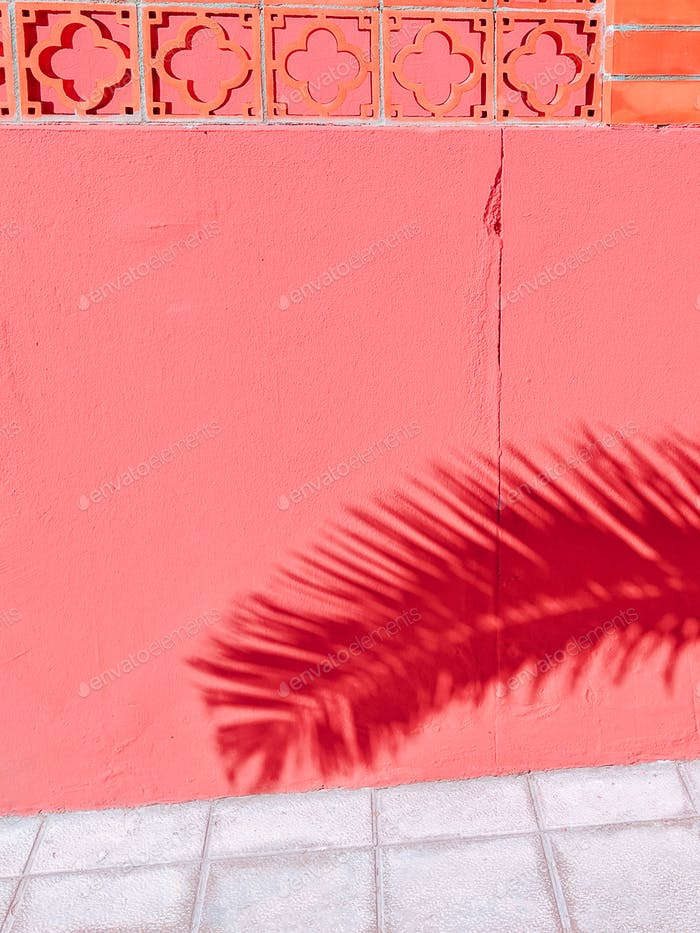 Plants on pink concept. Palm Shade. Minimal art