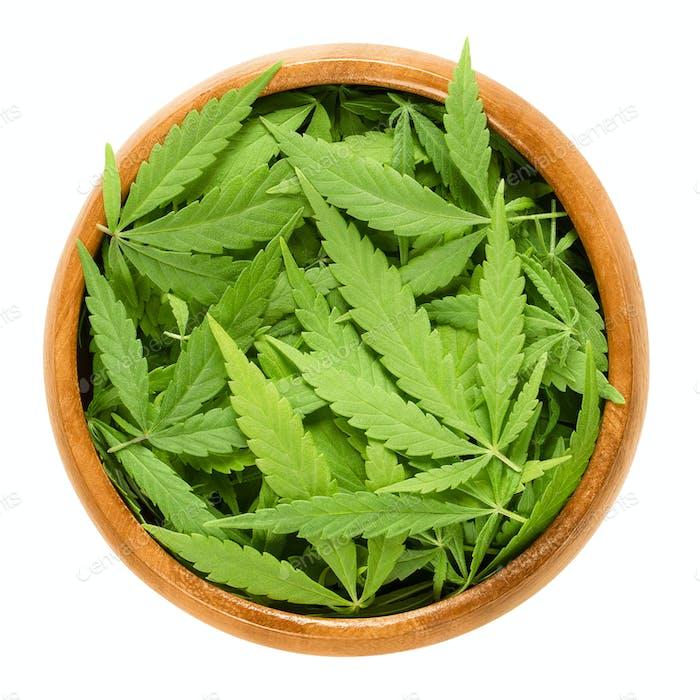 Cannabis-Fächer Blätter in Holzschale über weiß