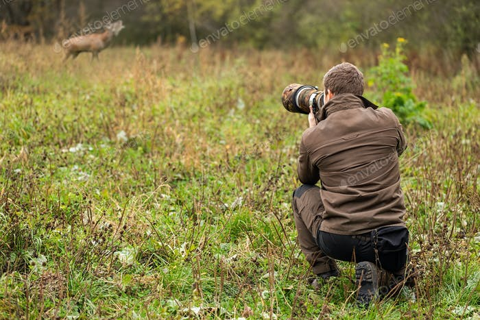Wildlife photographer in brown cloths taking pictures of red deer stag roaring