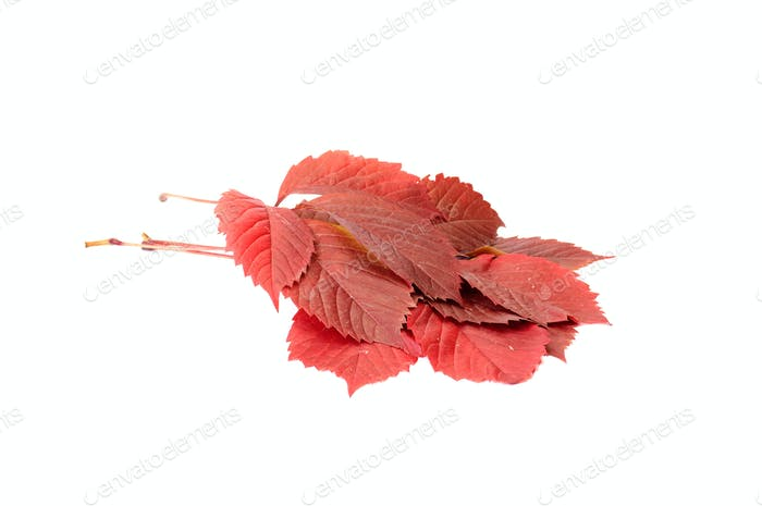 Fun autumn leaves on a white.