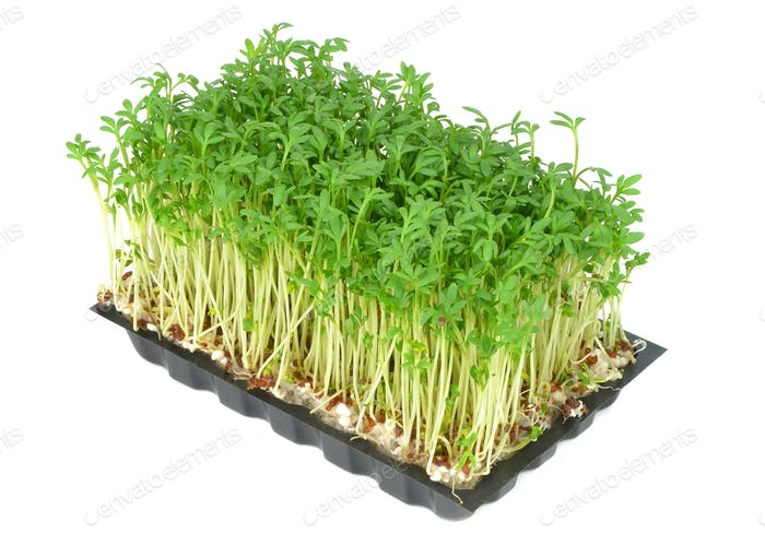 Watercress in a Tray