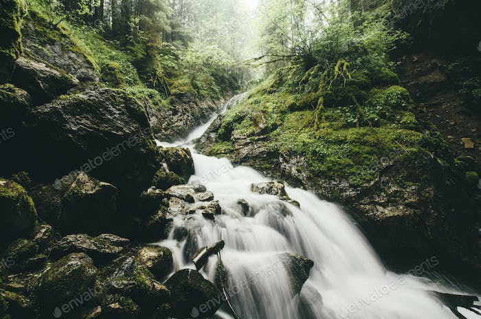 forest stream with lush vegetation, wilderness landscape