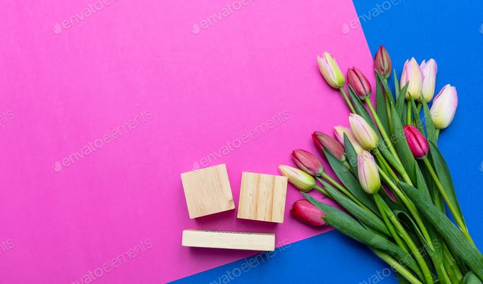 Tulips bouquet and blank date cubes on blue and bright pink background, top view, copy space