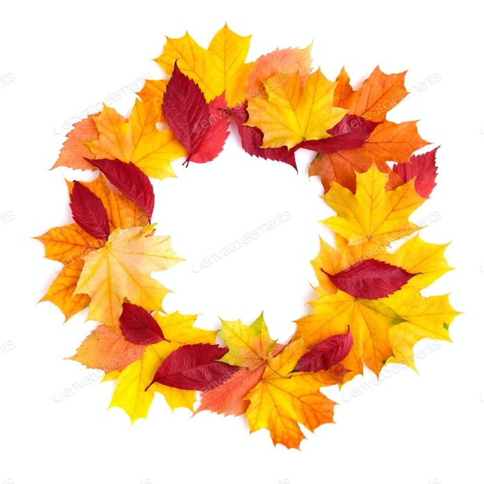 Wreath of autumn leaves isolated on white background