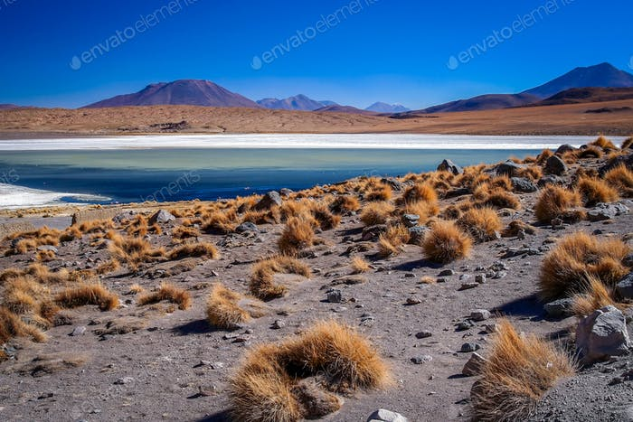 Altiplano lagoons and landscape