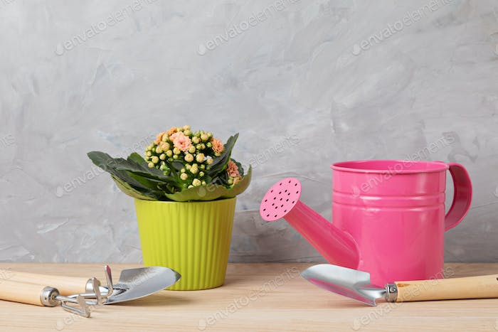 Home plant in green pot and gardening tools. Potted house plants against light wall. The stylish