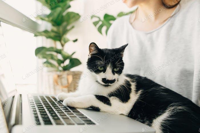 Nette Katze sitzt auf Laptop-Tastatur, hilft junge Frau online arbeiten