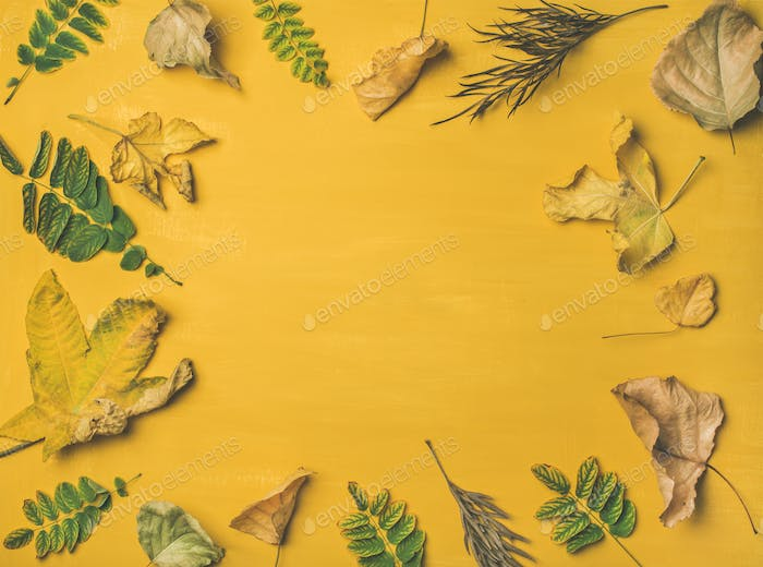 Autumn or Fall pattern, background and texture, copy space