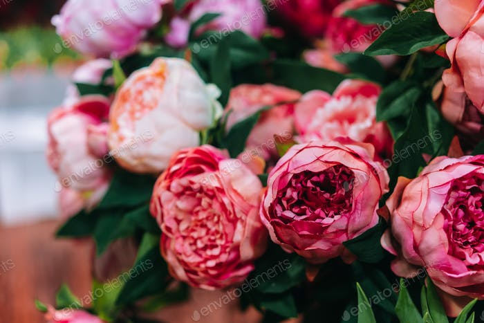 Lot of peonies, close up