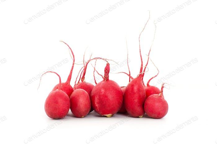 Ripe radishes on a white background.