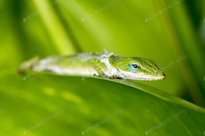 Gecko in rainforest