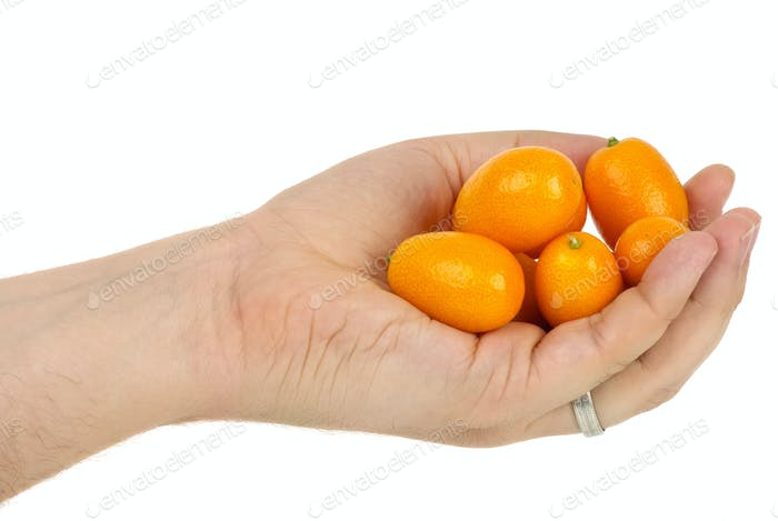Hand holding some kumquat fruits